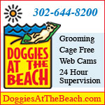 Doggies At The Beach - Doggie Day Care