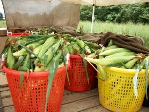 Freemans Corn