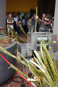 Trapiche for sugar cane.